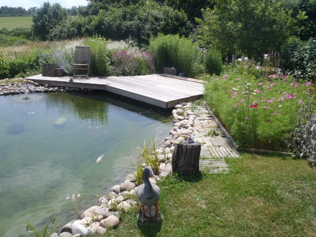 Aménagement paysager et aquatique, Bassin à filtration naturelle, COMBIER PAYSAGE 71