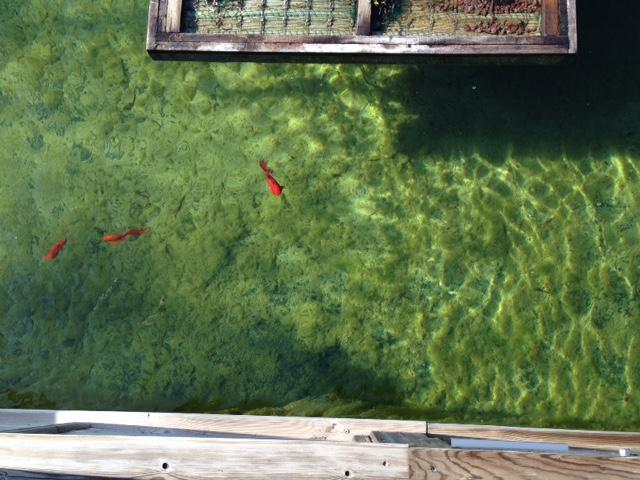 Aménagement extérieur bassin à poisson COMBIER PAYSAGE